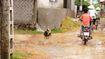 Vụ chó dại cắn 40 người tại Nghệ An: Tập trung khống chế ổ dịch
