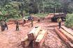 Đắk Lắk: Phát hiện và thu giữ khoảng 35m3 gỗ ở của rừng phòng hộ