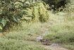 Thiếu nữ bị hãm hiếp được người soi ếch giải cứu