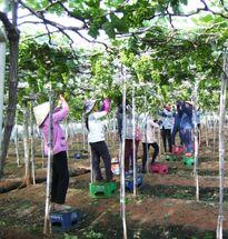 Những mô hình thoát nghèo ở Ninh Thuận