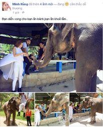 Minh Hằng thích thú cưỡi và cho voi ăn