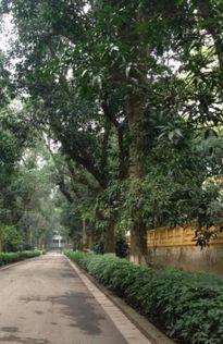 Kết luận thanh tra việc thay thế cây xanh tại Hà Nội khách quan, minh bạch