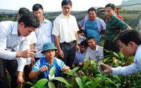 Phát triển cây mắc ca tại Việt Nam: Phải có thông tin nhiều chiều