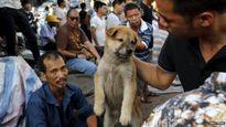 Hàng nghìn con chó bị làm thịt gây rúng động trong lễ hội ở Trung Quốc