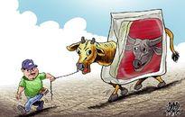 Trâu hóa bò