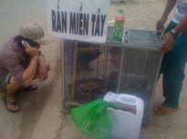 """""""Rắn cực độc""""xuống đường phố Biên Hòa"""