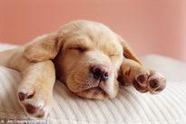 """Sự thật về việc bàn chân thú cưng có mùi """"bắp rang bơ"""""""