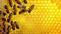 Khám phá kinh ngạc về chất tiết côn trùng
