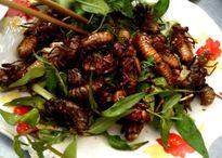 Ăn côn trùng có thể tử vong
