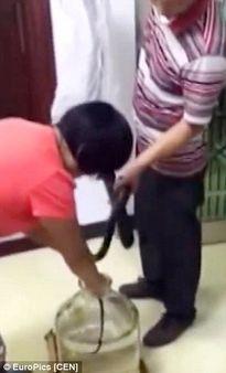 Rùng mình đoạn video dùng rắn hổ mang sống ngâm rượu ở Trung Quốc