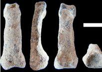 Kinh ngạc mẩu xương ngón tay út bí ẩn có niên đại gần 2 triệu năm