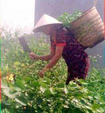 """Lương y Nguyễn Thị Gái - """"Vị cứu tinh"""" của người mắc bệnh hiểm nghèo"""