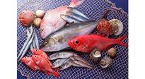 """Doanh nghiệp thủy sản: Hàng ngon mang đi xuất khẩu, trong nước toàn """"hàng dạt"""""""