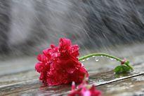 Dự báo thời tiết ngày mai 28/8: Mưa rào và dông trên cả nước
