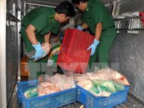 Phát hiện và tiêu hủy hơn 7 tạ bì lợn đang phân hủy trên xe khách