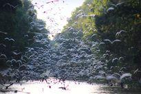 Bí kíp săn ảnh chim trời ở khu ramsar Tràm Chim