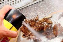 Lưu ý khi dùng thuốc xịt côn trùng