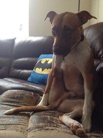 """Chú chó kỳ lạ thích """"ăn"""" chân của mình"""