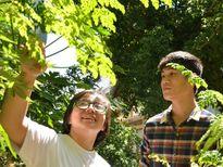 Sáng tạo trẻ: Từ chuyện cây chùm ngây...