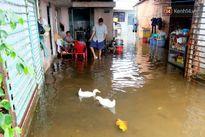Vịt bơi tung tăng trong nhà dân sau trận ngập lịch sử ở Sài Gòn