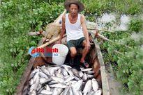 Cá lồng bè chết hàng loạt ở Hộ Độ: Chủ quan của nhà chức trách!