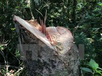 """Rừng phòng hộ Đại Ninh bị tàn phá với tốc độ """"chóng mặt"""""""