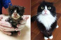 Những chú mèo 'hồi sinh' sau khi được giải cứu