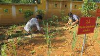 Nỗi lo của học sinh nghèo Lào Cai - Kỳ cuối