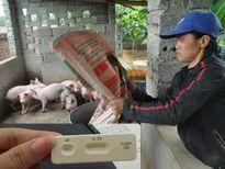 """Phát hiện """"SỐC"""": Có chất gây ung thư trong thức ăn chăn nuôi"""