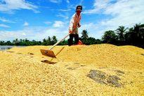 Gạo Việt bị cạnh tranh quyết liệt ở phân khúc cấp thấp