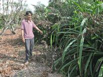 Rùng rợn đồn thổi rắn khổng lồ báo oán ở Bắc Giang