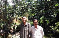 Hà Lâm, mùa sầu riêng trái chín