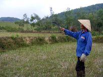 Hàng loạt sai phạm tại Cty Lâm nghiệp Trà Tân