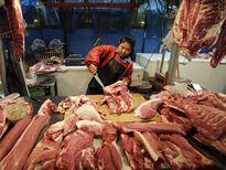 Minh oan cho lợn siêu nạc