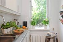 Cách trồng cây xanh hút khí độc cho căn nhà của bạn
