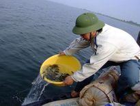 Thả gần 800.000 con cá giống vào hồ Dầu Tiếng