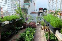 Các cách trồng đủ rau ăn trong diện tích nhỏ