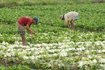 Vì sao nông nghiệp khó hút vốn?