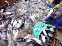 Cánh đồng lớn trong nuôi trồng thủy sản