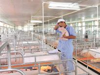 Thấy gì từ sóng đầu tư Thái Lan?