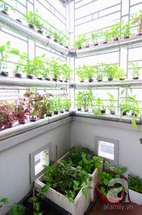 Vườn thủy canh đầy rau sạch trên sân thượng của cô nàng công sở tại Hà Nội