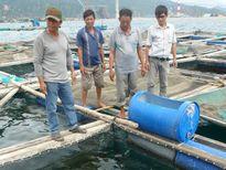 Theo dõi chặt chẽ tình hình nuôi cá lồng bè ở Vĩnh Tân
