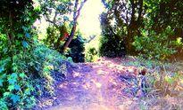 Mở đường trái phép ở Khu bảo tồn thiên nhiên Sơn Trà
