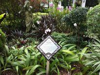 Độc đáo quảng bá hoa lan Singapore