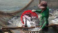 Việt Nam thất vọng vì Hoa Kỳ triển khai giám sát cá tra và cá basa