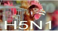 Tin vui: Chưa phát hiện trường hợp người Việt nào nhiễm H5N1 trong năm 2015