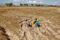 Việt Nam chịu tác động nhiều bởi El Nino