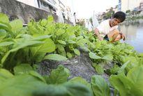 """Dân Thủ đô tự trồng rau sạch kiểu """"cao nguyên đá"""""""