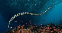 TOP những loài rắn độc nhất hành tinh