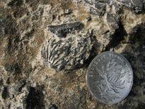 Phát hiện hóa thạch hột đào 2,5 triệu năm ở Trung Quốc